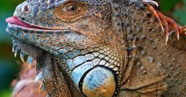50.700 cargos por pirateo para un joven miembro de Lizard Squad