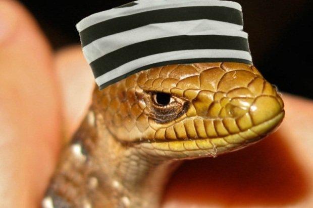 prison_lizardsquad-1024x436