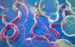 Ebola, hackers drive word of the year: 'Exposure'